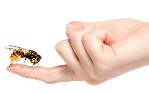 Лечение пчелами или апитерапия