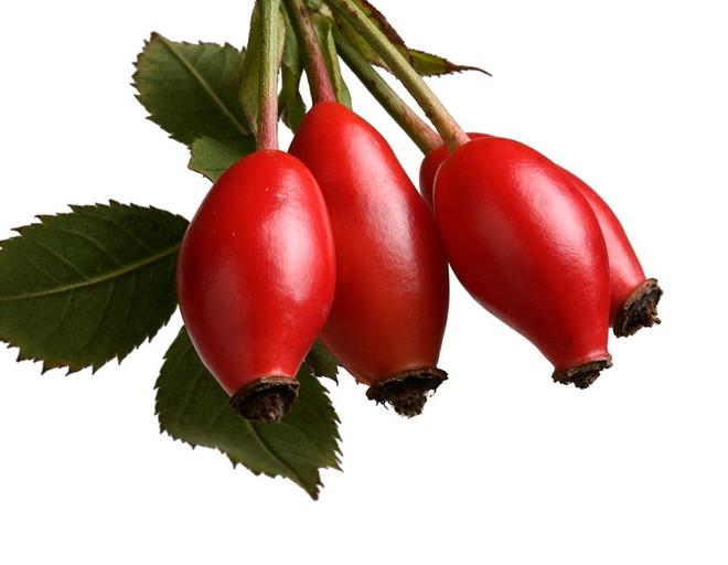 Шиповник применяется главным образом как поливитаминное средство при лечении заболеваний, вызванных недостатком в организме аскорбиновой кислоты и других витаминов, а также при малокровии, как общеукрепляющее при истощении организма и других заболеваниях.