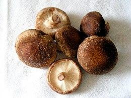 Гриб шиитаке является источником незаменимых аминокислот, микро- и макроэлементов, жирных кислот, полисахаридов, витамина Д грибных фитонцидов.