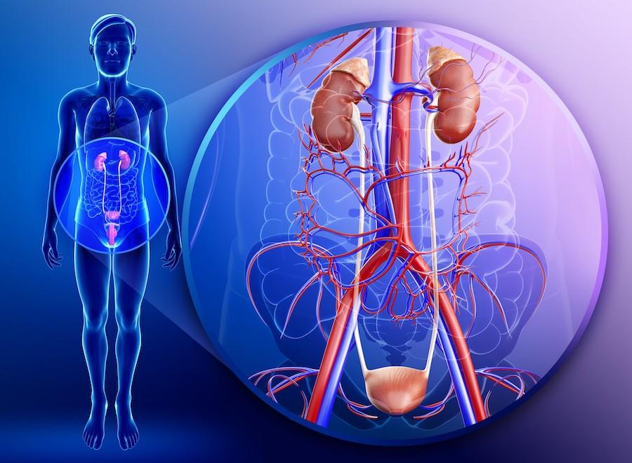 Причины и симптомы воспаление мочеполовой системы